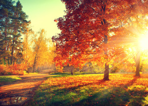 Autumn scene. Fall. Trees and leaves in sun light
